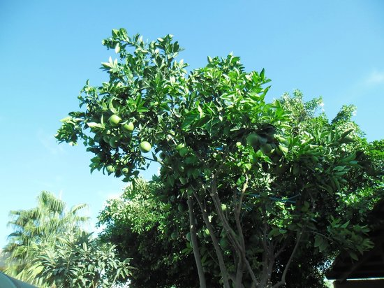 SENTIDO Blue Sea Beach : Beautiful garden