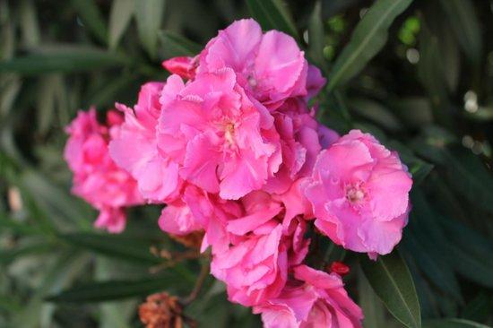 Sentido Ixian Grand : Цветы необыкновенные.