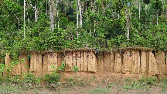 Wasai Tambopata Lodge: Macaw Clay lick