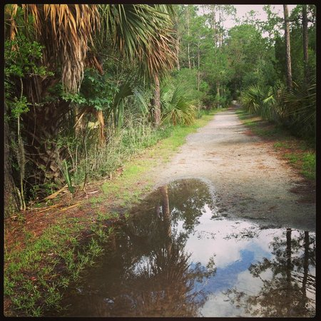 Skidaway Island State Park: Trails after the storm