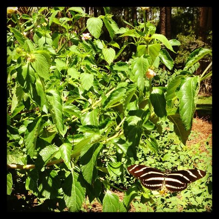 Skidaway Island State Park: Make sure you visit the butterfly garden outside of the Interpretive Center.