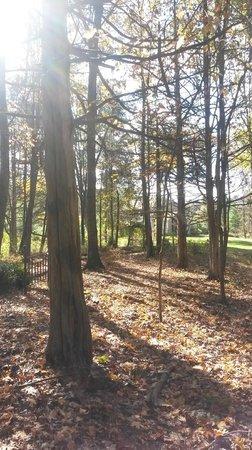 Moondance Ridge Bed & Breakfast: Woodland walk area