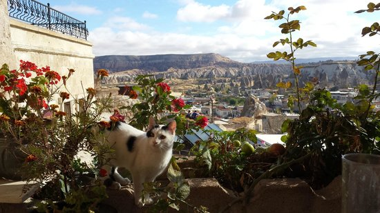 Kelebek Special Cave Hotel: View from restaurant terrace with one of the lovable house cat.
