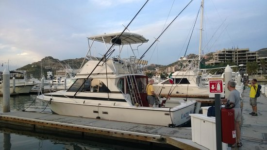 The lady marlin 35 39 bertram picture of los amigos for Los angeles fishing charters
