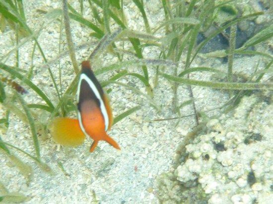 Tubakula Beach Bungalows : Friendly fish