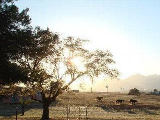 Xanadu Ranch GetAway / Private Guest Rooms / Guest Ranch & Horse Motel : Morning Land Horses