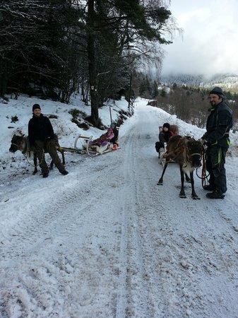 La Petite Finlande: Ballade avec les rennes du Père Noël