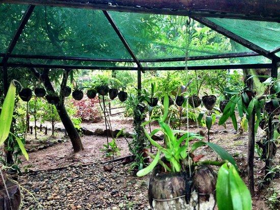 Treetops: The garden
