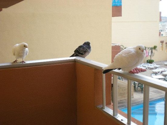 Luna Holiday Complex: Friends on the balcony!