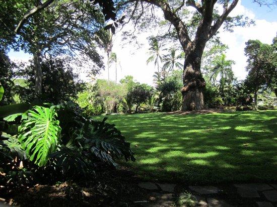 Foster botanical garden picture of foster botanical gardens honolulu tripadvisor for Foster botanical garden honolulu