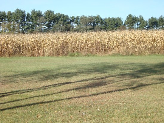 Round Barn Lodge: corn fields outside