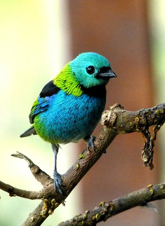 Hotel Do Ype : Green headed tanager.