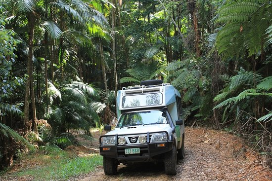 Kenilworth, Australia: In The Rainforest