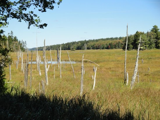 Acadia Oceanside Meadows Inn: The salt marsh
