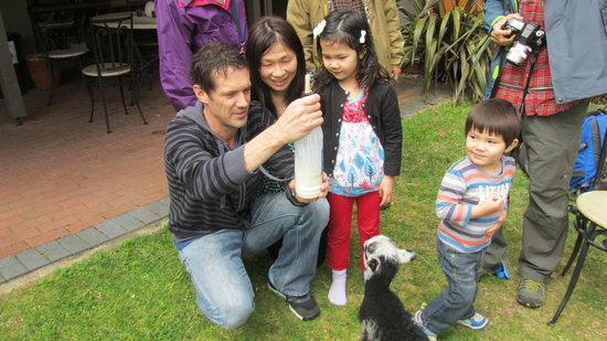 B&B @ The Redwoods: Our Japanese Guests Helping to feed our adopted lamb