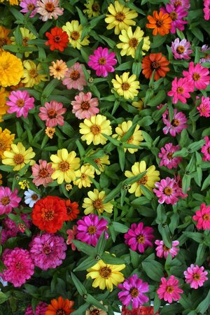 Mercado Jean-Talon: Flowers at the market