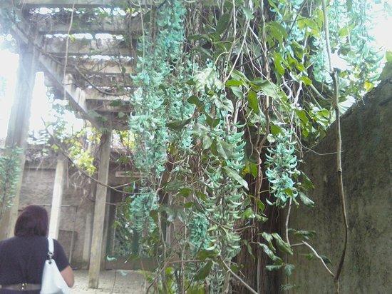 Sitio Roberto Burle Marx: plantas no Sítio Burle Marx