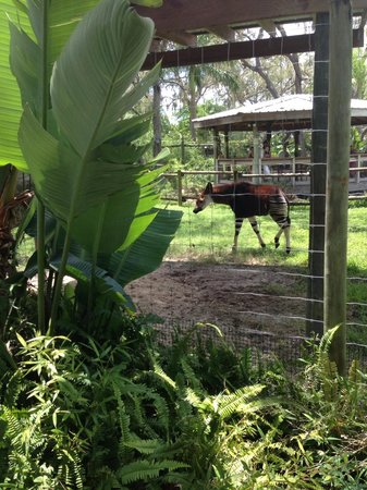 zebra/deer/ and something else mixed - Picture of Tampa's ...