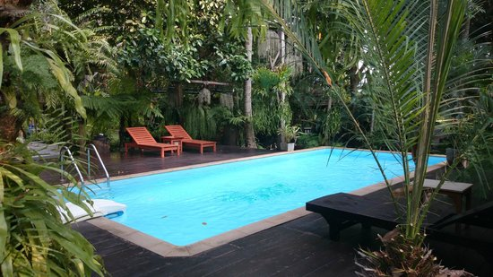 Fern Paradise : 泳池