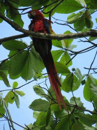 Encanta La Vida: Scarlet macaws everywhere