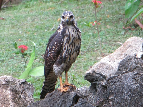 Encanta La Vida: Hawk in front of the office