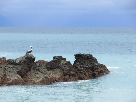 Encanta La Vida: Pelicans love fishing