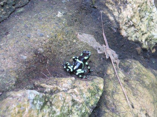 Encanta La Vida: Poison dart frog by the dining room
