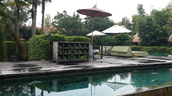 Siripanna Villa Resort and Spa Chiang Mai: The swimming pool - Happy Hours