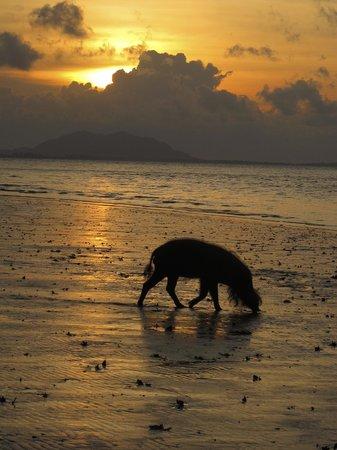 Bako National Park Hostel: sunset from the beach, very placid pig