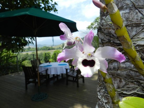 Daintree Village Bed and Breakfast: Wild orchids and the deck were breakfast is served