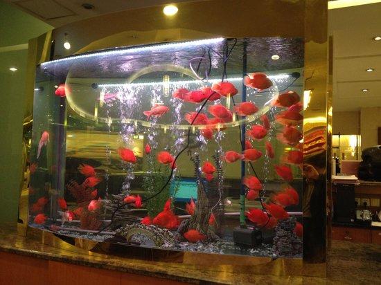 Charms Hotel: 四階のレストランにある水槽。綺麗です。