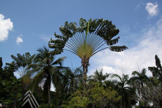 Krabi Resort: ved poolen