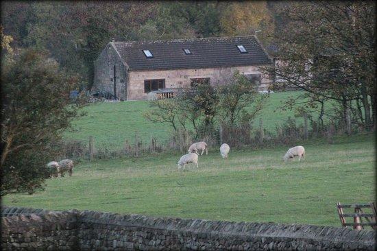 Knabbs Ash Bed & Breakfast: View from room 2