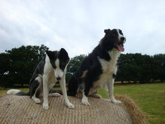 Bury Hill Farmhouse: My dogs
