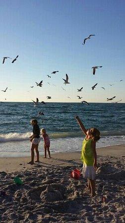 Palm Island Resort: birds