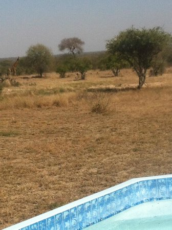 nThambo Tree Camp : view from the pool