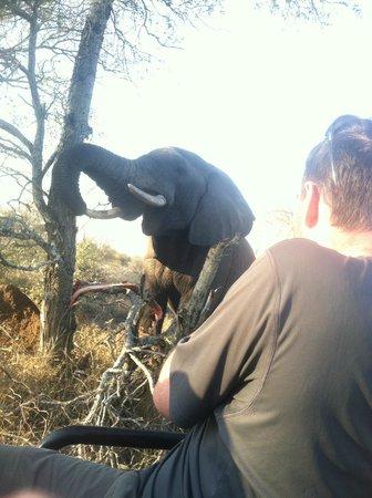 nThambo Tree Camp : a VERY close encounter!