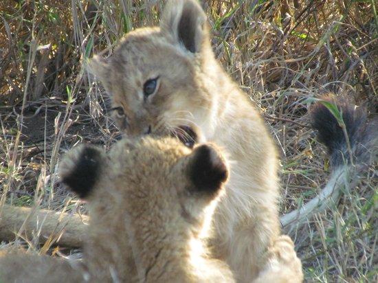 nThambo Tree Camp : cubs