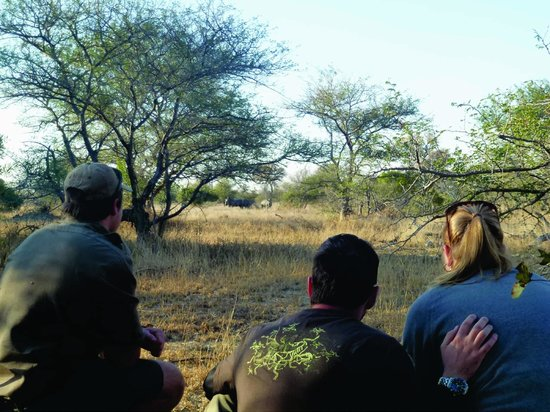 nThambo Tree Camp : game walk - we tracked rhinos and finally caught up with them!