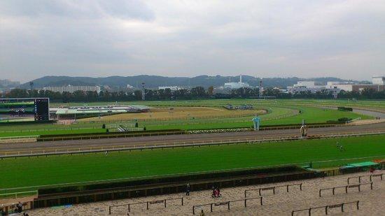 Tokyo Horse Racetrack : 正面スタンド5階から