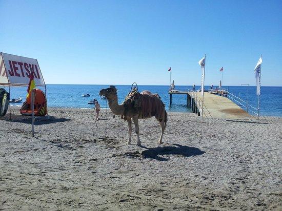 Dinler Hotels - Alanya: Beach