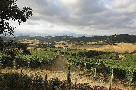 Maremma Wine and Company