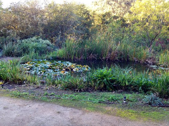 Meadowlark Country House: pond