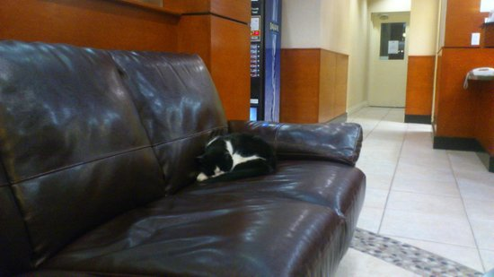 Days Inn - Vancouver Airport: Hotel Cat