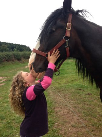 Cotebrook Shire Horse Centre