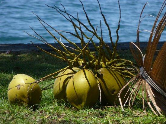 Ciliks Beach Garden: Gleich gibt es frische Kokosmilch !