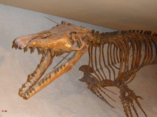 Natural History Museum (Natuurhistorisch Museum): Hier begint het .