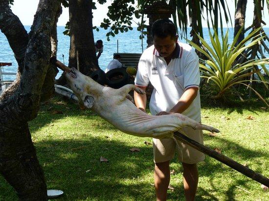 Ciliks Beach Garden: armes Schwein!  aber es war sehr sehr lecker !!!!