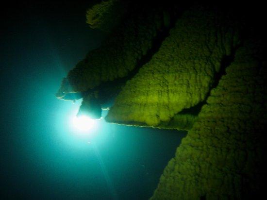 "Yucatek Divers: Cenote Kin Ha- ""Hell's Bells"""