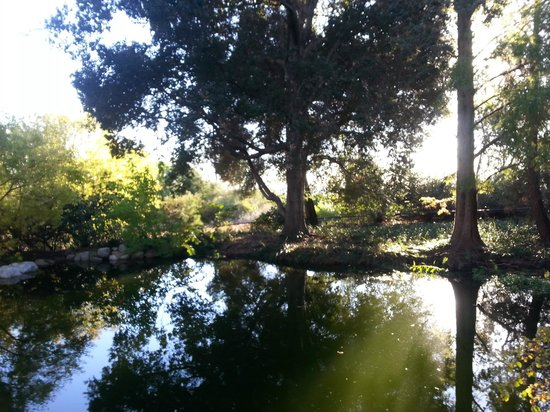 Superieur Rancho Santa Ana Botanic Garden: Reflection In Benjamin Pond